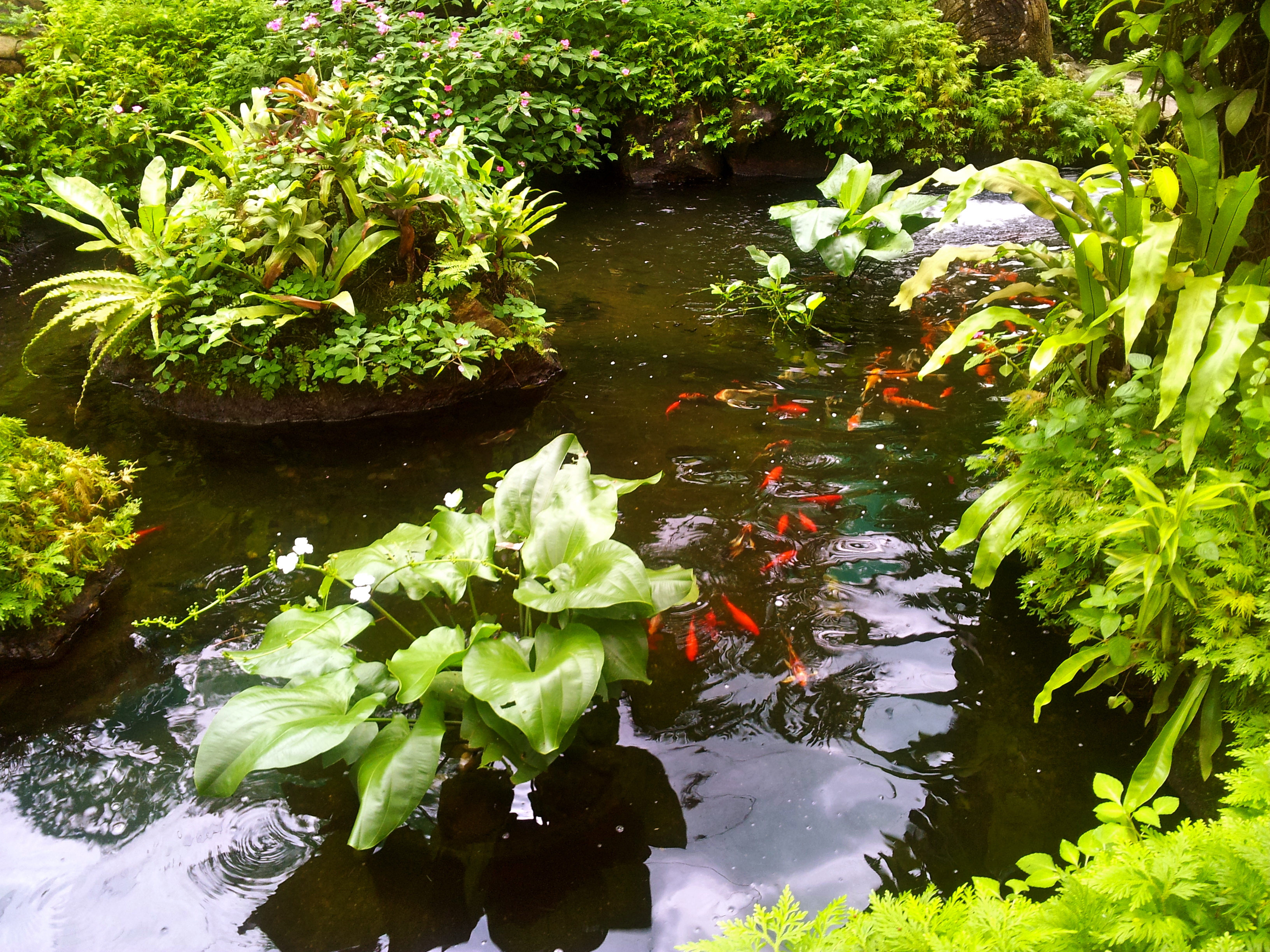 Fish pond in butterfly park kuala lumpur peachbox by dm for Salt in koi pond