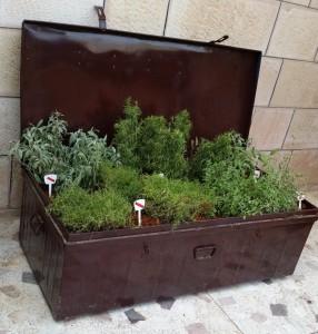 Upcycle Mediterranean Herb Box