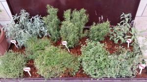Mediterranean Herb Box